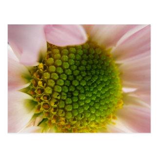 El hacer estallar con polen ..... tarjeta postal