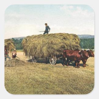 El hacer heno en Nueva Inglaterra - vintage 1900 Pegatina Cuadrada