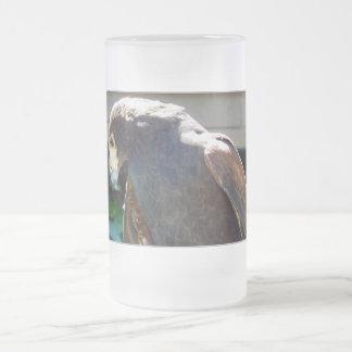 El halcón de Harris Taza
