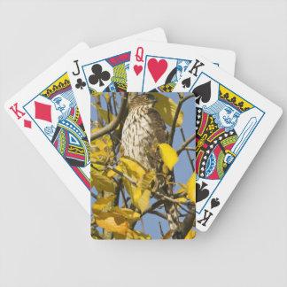 El halcón de Swainson en el jardín chino 2 del Lan Cartas De Juego