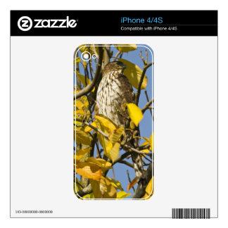 El halcón de Swainson en el jardín chino 2 del Lan Calcomanías Para El iPhone 4S