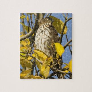 El halcón de Swainson en el jardín chino 2 del Lan Rompecabeza Con Fotos