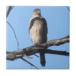El halcón del tonelero azulejo ceramica