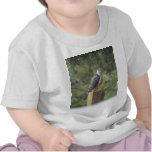El halcón del tonelero camisetas