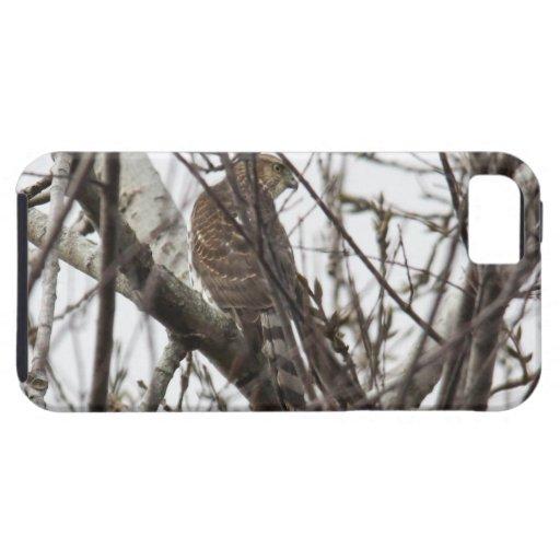 El halcón del tonelero iPhone 5 Case-Mate protector