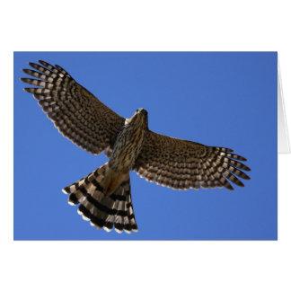 El halcón del tonelero - Joe Sweeney - tarjeta