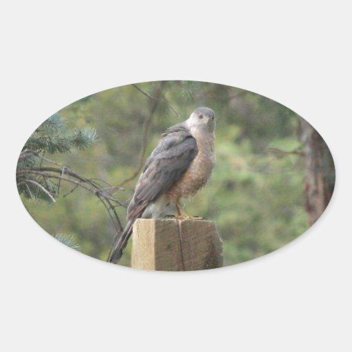 El halcón del tonelero pegatina ovalada
