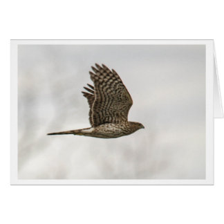 El halcón del tonelero tarjeta de felicitación