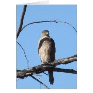 El halcón del tonelero tarjeta pequeña