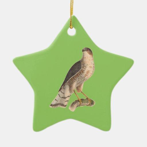 El halcón Pizarra-coloreado(fuscus de Astur) Ornamente De Reyes