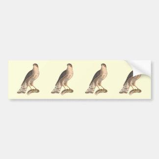 El halcón Pizarra-coloreado(fuscus de Astur) Pegatina Para Auto