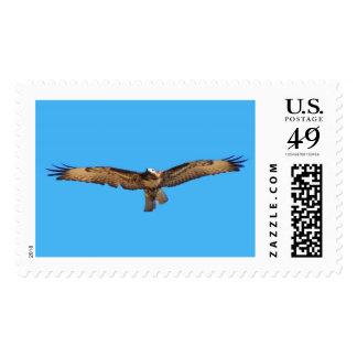 El halcón Rojo-atado majestuoso se eleva en vuelo Estampilla