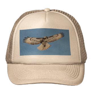 El halcón se va volando en vuelo abierto de par en gorras de camionero