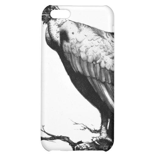 El halcón viejo
