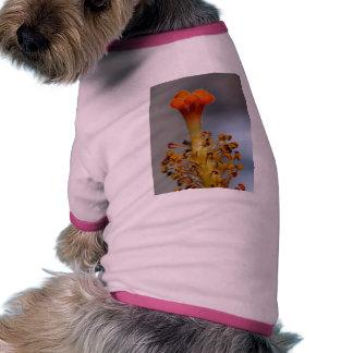 El hibisco florece Pistils de los estambres Prenda Mascota