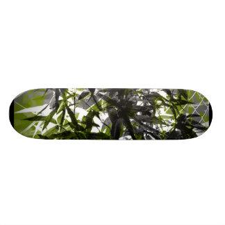 El hidea verde monopatin