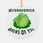 El hidrocultivo produce en usted lechuga adornos de navidad