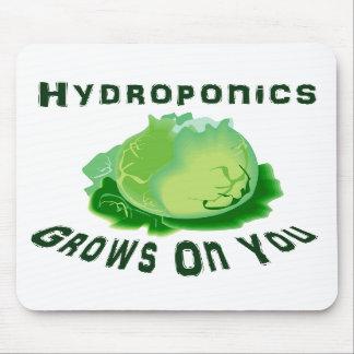 El hidrocultivo produce en usted lechuga tapetes de raton