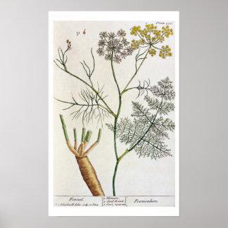 """El hinojo, platea 288 """"de un herbario curioso"""", pu impresiones"""