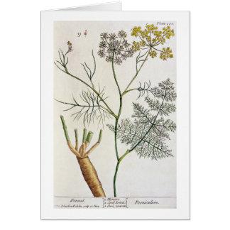 """El hinojo, platea 288 """"de un herbario curioso"""", pu tarjeta de felicitación"""