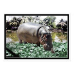 El hipopótamo y el pájaro tarjetas de visita grandes