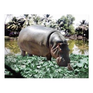 El hipopótamo y el pájaro postal