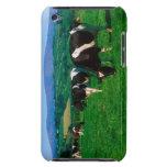 El Holstein-frisón se acobarda cerca de Borris, co iPod Touch Case-Mate Carcasas