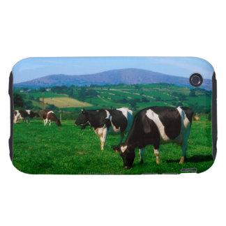 El Holstein-frisón se acobarda cerca de Borris, iPhone 3 Tough Fundas