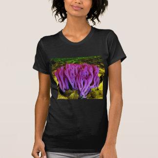 El hongo coralino violeta Clavaria Zollingeri Polera