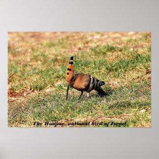 El Hoopoe, pájaro nacional de Israel, poster de la