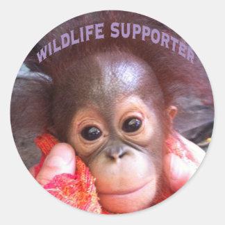 El huérfano más lindo del orangután del bebé pegatina redonda