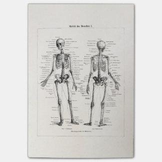 El hueso humano esquelético de la anatomía del notas post-it®