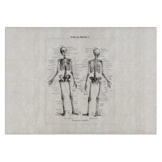 El hueso humano esquelético de la anatomía del tablas de cortar