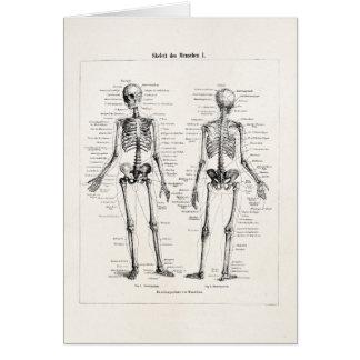 El hueso humano esquelético de la anatomía del tarjeta pequeña