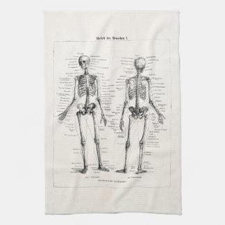 El hueso humano esquelético de la anatomía del toalla de cocina