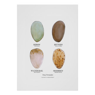 el huevo salvaje del pájaro fijó 3, fernandes tony póster