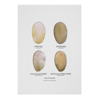el huevo salvaje del pájaro fijó 6, fernandes tony póster