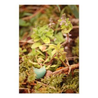 El huevo y los Wildflowers del petirrojo Impresión Fotográfica