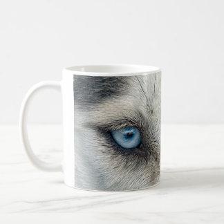 El husky siberiano observa la taza