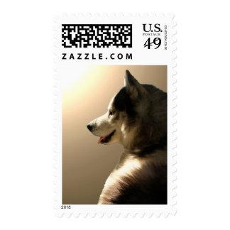 El husky siberiano sella sellos del perro de trine
