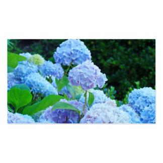 El Hydrangea azul de las tarjetas de visita florec