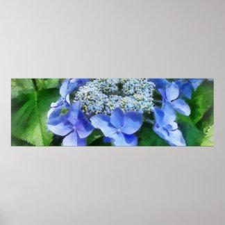El Hydrangea azul del casquillo del cordón nos dej Impresiones