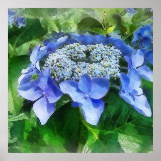 El Hydrangea azul del casquillo del cordón nos dej Posters
