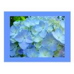 El Hydrangea azul florece Hydrangeas florales de l Tarjetas Postales