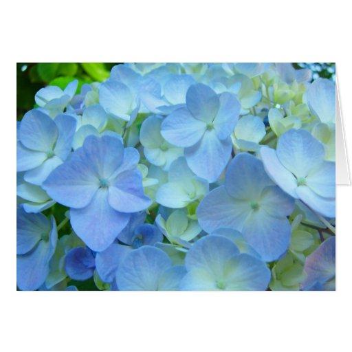 El Hydrangea azul florece las tarjetas de felicita