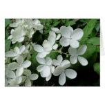 El Hydrangea blanco del pis Gee florece la tarjeta