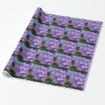 El hydrangea hermoso, púrpura florece, abrigo de