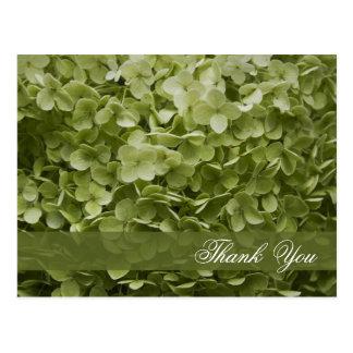 El Hydrangea verde de Annabelle floral le agradece Tarjeta Postal