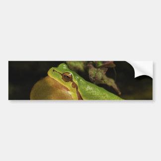 El Hyla italiano Intermedia de la rana arbórea Etiqueta De Parachoque