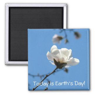 El imán de la flor de la magnolia es hoy el día de